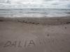 2015 Papė. Drama ant kranto
