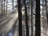 Šviesa ir sniegas